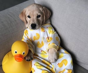 dog, duck, and puppy image
