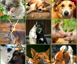 animals, Collage, and my creation image