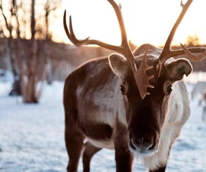 adorable, reindeer, and snow image