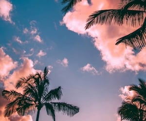 cielo and palmeras image
