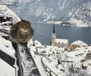 Animales, cat, and winter image