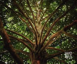 arboles, beautiful, and green image