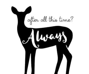 always, deathly hallows, and harry potter image