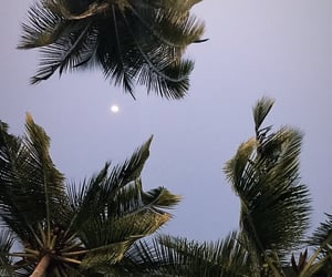 aesthetic, beach, and moon image