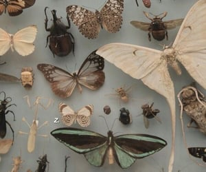 butterfly, insects, and theme image