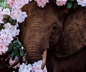animal, elephant, and flowers image