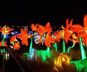 butterfly, china, and luces image