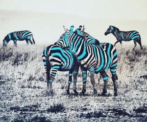 animals, zebra, and Collage image