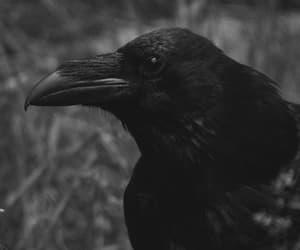 animal, gothic, and black image