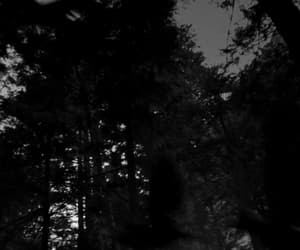 crow, forest, and goth image