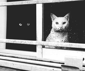 cat, animal, and black image
