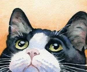 animals, black and white, and art image
