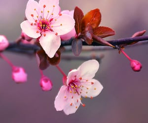 branch, springtime, and pink flowers image