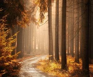 autumn, bosque, and fotografía image