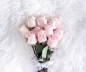 flowers, roses, and girly image