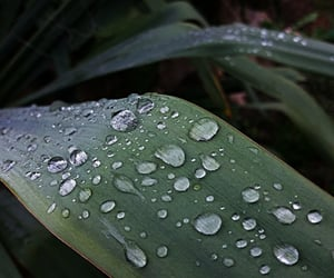 dew, nature, and drop image