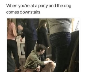 alcohol, dog, and funny image