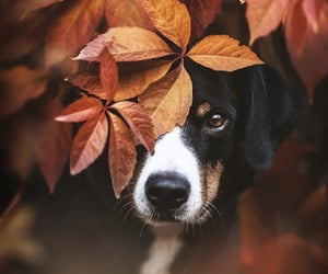 autumn, leaves, and animals image