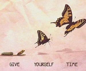 butterfly, time, and life image