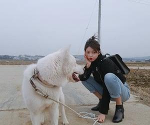 aesthetic, dog, and kpop image