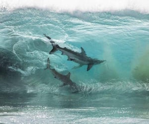 ocean and shark image