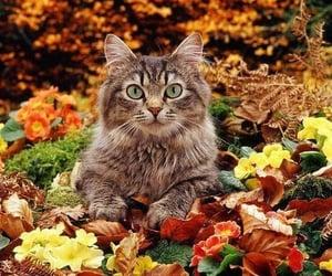 autumn, animals, and cat image