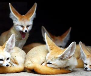 hewan peliharaan image