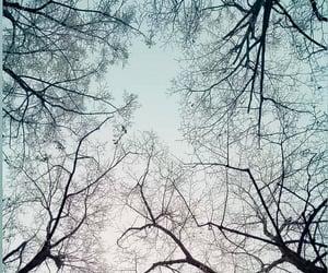 nostalgic, sky, and trees image