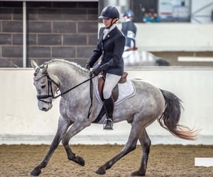 dressage, equestrian, and equine image