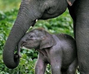 animal, animals, and elefant image