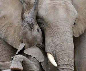 africa, animals, and safari image