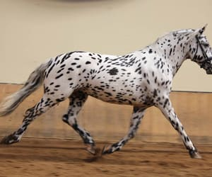 animal, riding, and animals image