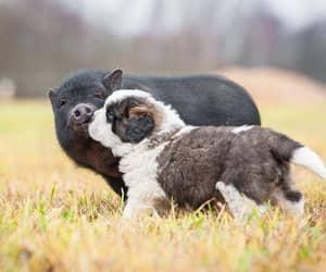 animal, dog, and animals image