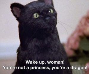 cat, movie, and grunge image