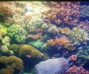 aquarium, colours, and fish image