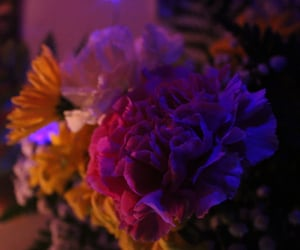college, floral, and flowers image