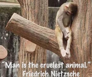save animals, fight for animal rights, and have mercy image