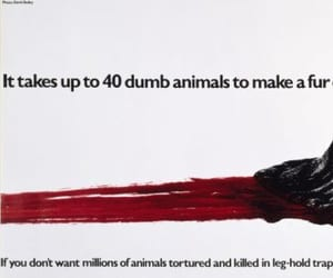save animals, fight for animal rights, and stop torturing animals image