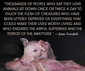 have a heart, save animals, and stop the suffering image