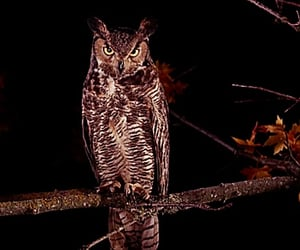 Lara Flynn Boyle, Twin Peaks, and owl image