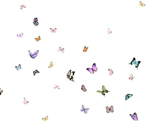 png, butterfly effect, and butterfly png image