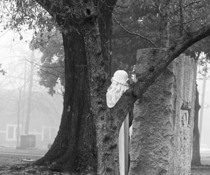 grave, mist, and tree image