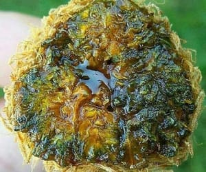 buy weed online usa, sun rocks for sale, and buying legal weed online image