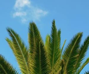 beach, wallpaper, and palmeras image
