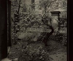 1950's, photography, and Josef Sudek image