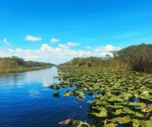 Miami, nature, and usa image