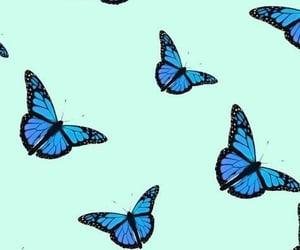 butterfly, wallpaper, and blue image