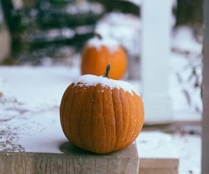 colorado, fall, and pumpkin image
