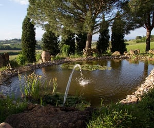 italy, pond, and nature image