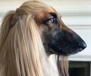 animal, dog, and hair image